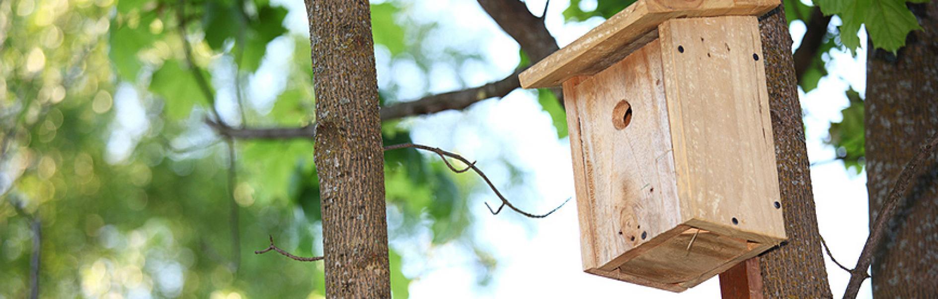 bauen sie ein eigenes vogelhaus aus holz